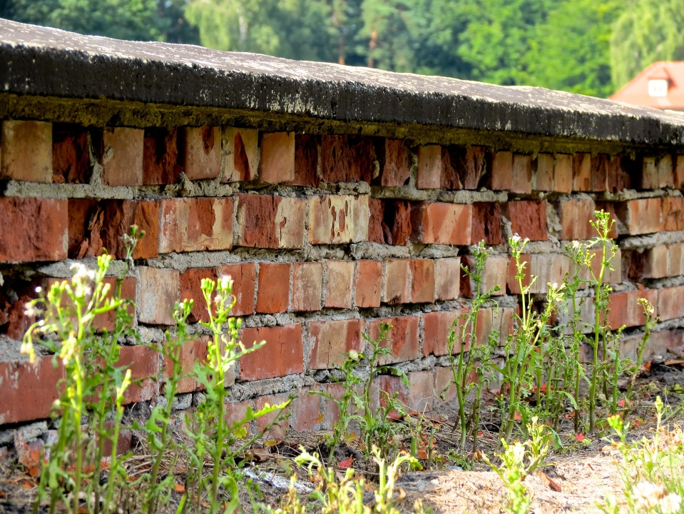 The crumbling foundation of one of the workhouses.