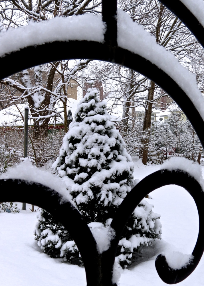 Winter Dreams: A Photo Essay (2/6)
