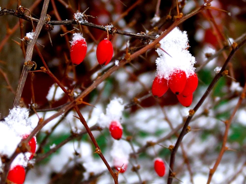 Winter Dreams: A Photo Essay (3/6)
