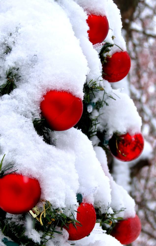 Winter Dreams: A Photo Essay (5/6)