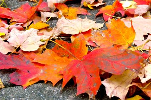 Brilliant colors of Autumn.