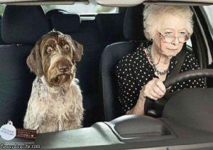 Bad_Driver