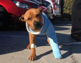 injured-dog-278x218