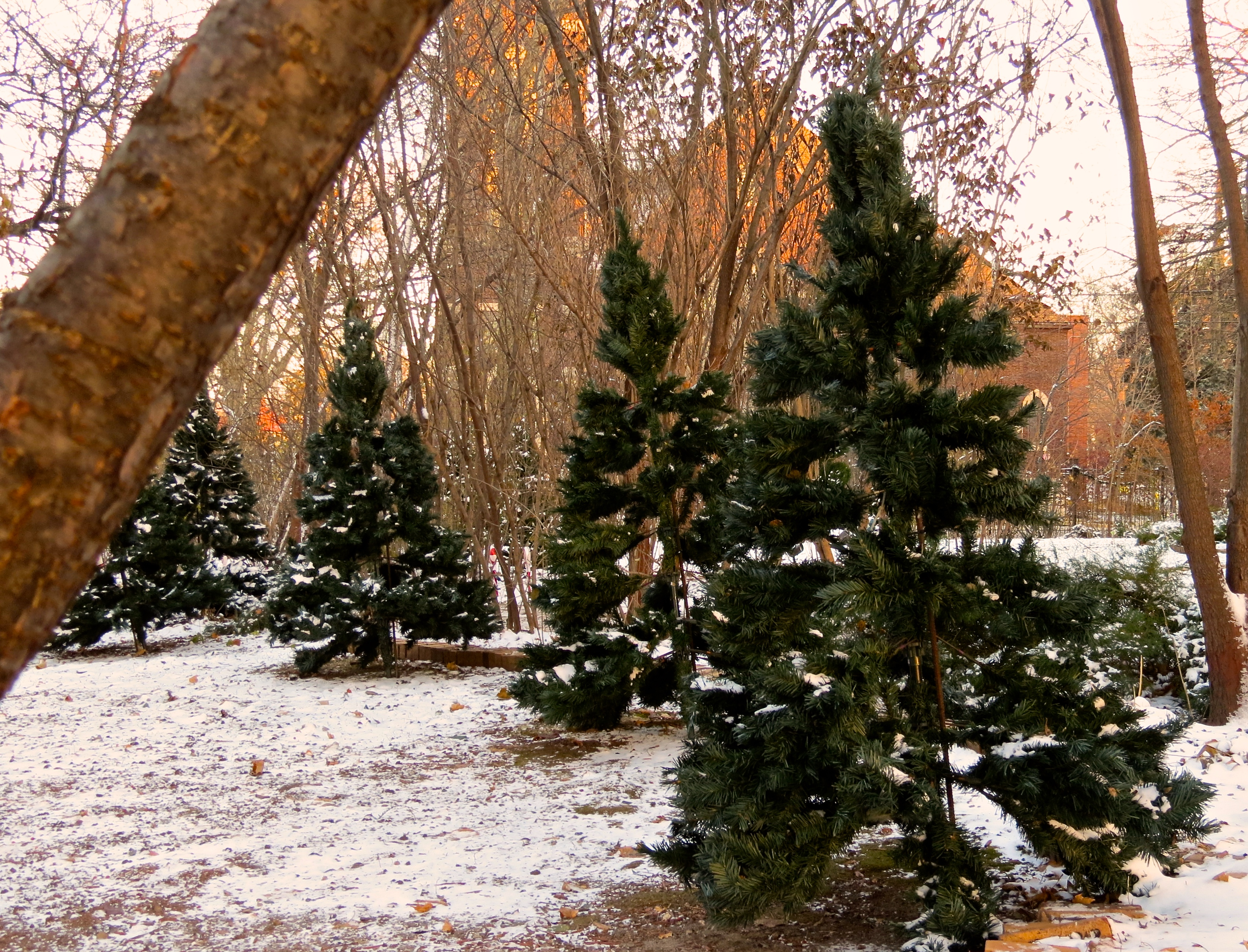 Artificial christmas trees 171 how do you measure 525600 minutes