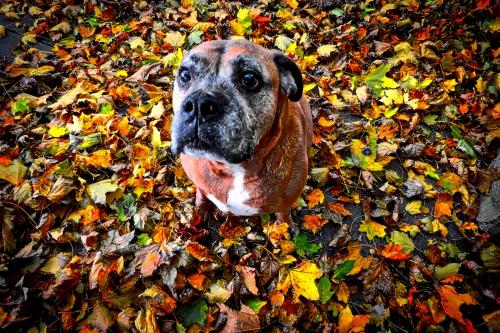 Roxie, November 2013.