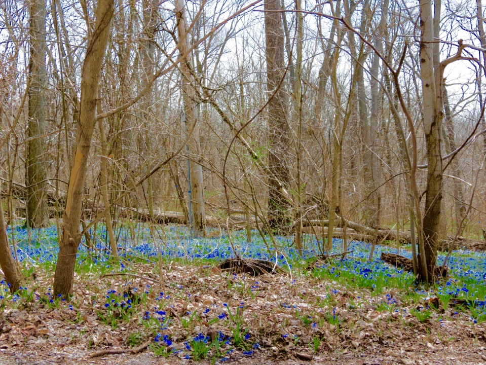 A little color as spring begins to invade Trout Park along the Fox Valley Trail.