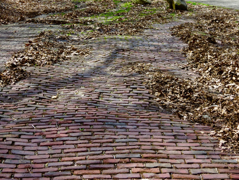 """""""Brick Roadway on North Spring Street"""" (1930's) is the last exposed brick remaining in Elgin."""