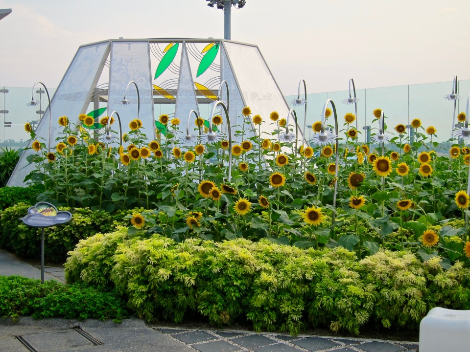 The Sunflower Garden at Singapore Changi Airport.