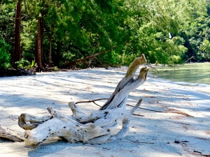 Drift wood on Koh Kood.