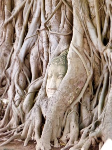 Buddha engulfed by tree roots.