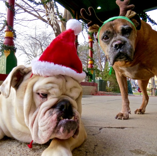 Dudley and Cash were not amused by the head gear.