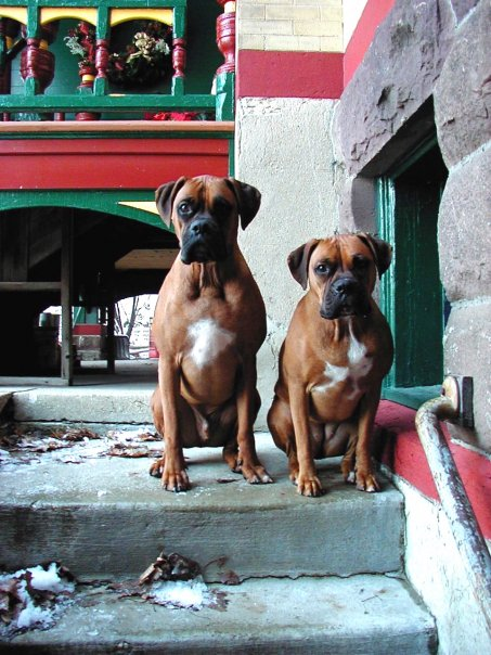 Cash & Roxie as puppies.