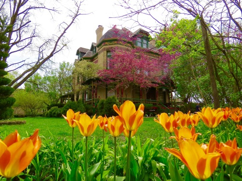 Spring at home. The John Newman House built in 1889 also known locally as 'The Butterman Mansion'.