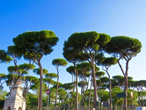 Italian Stone Pines form a canopy over Borghese Gardens.
