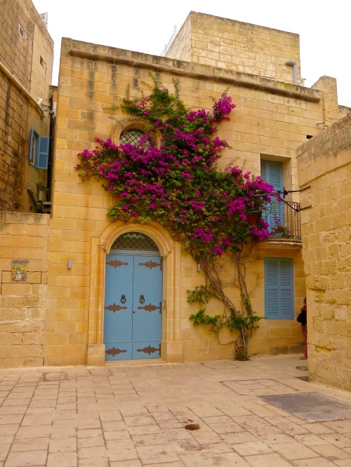 Bougainvillea climbing the wall of a building in Mdina.
